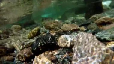 Underwater camera in mountain stream — Stock Video