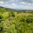 Carpathian Mountains in Ukraine — Stock Photo