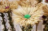 Geconfectioneerde bloemen — Stockfoto