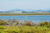 Flamingos next to Cagliari, Sardinia — Stock Photo