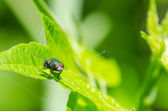 Insect fly macro — Stock Photo