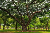 Big green tree — Stock Photo