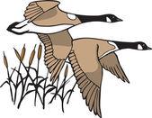Canada Geese — Stock Vector