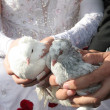 Bride and groom holding white doves — Stock Photo