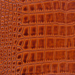 Texture of crocodile skin — Stock Photo