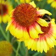 Stock Photo: Bee on the flower