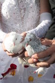 Bride and groom holding white doves — ストック写真