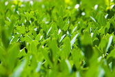 Verde foglie trama — Foto Stock