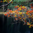 Stock Photo: Autumn reflections.