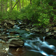 Water Stream in wild — Stock Photo #30892825
