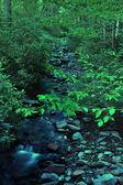 Water Stream in wild — Stock Photo