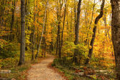 Beautiful walkway in with fall colors in Michigan USA — Stock Photo