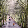 Pedestrians in a tree-lined avenue in winter — Stock Photo