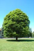 Jedno drzewo — Zdjęcie stockowe