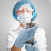The reception was at the veterinarian — Stock Photo