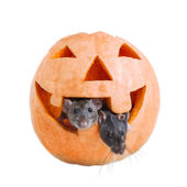 Two mouse and pumpkin halloween — Stock Photo