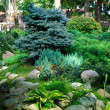 Small fir tree in the garden — Stock Photo #31104877