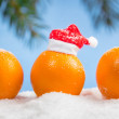 Oranges and branch of Christmas tree — Stock Photo #35537239