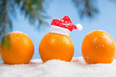 Oranges and branch of Christmas tree — Stock Photo