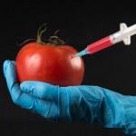 опасны ли нитраты в помидорах ЧАСТЬ Адрес местонахождения