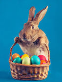 Easter rabbit holds a basket — Stock Photo