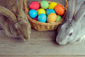 Two Easter bunny — Stock Photo