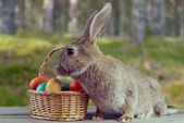 Easter bunny outdoor — Stock Photo