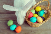 White Easter bunny with basket — Stock Photo