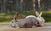 Two rabbits sit on a wooden table — Stock Photo