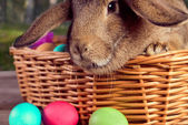 Brown bunny in a basket outdoor  — Stock Photo