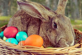 Brown rabbit in a basket outdoor  — Stock Photo