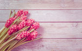 Red hyacinths on a table — Stock Photo