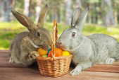 Two rabbits in a basket — Stock Photo
