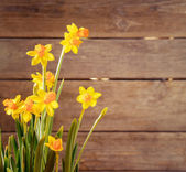 Bouquet of daffodils — Stock Photo