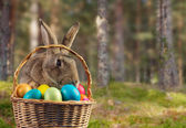 Easter rabbit in a basket on nature — Stock Photo