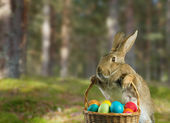 Easter rabbit on nature — 图库照片
