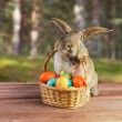 Easter rabbit sits with basket outdoor — Stock Photo #42308343