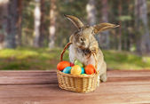 Easter rabbit sits with basket outdoor — Stock Photo