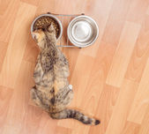 Kitten eats from a bowl, top view — Stock Photo
