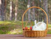 Vit påsk kanin sitter i en korg — Stockfoto