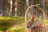 Brown Easter rabbit — Stock Photo