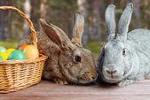 Paar van pasen konijnen — Stockfoto