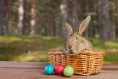 Pasen konijn in een mand — Stockfoto