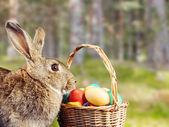 Hermoso conejo de pascua — Foto de Stock