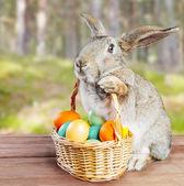 Conejo de pascua marrón — Foto de Stock