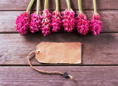 Hyacinths and empty card — Stock Photo