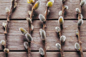 Willow branches on a wooden background — Foto Stock