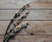 Willow branches on a wooden table — 图库照片