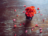 Red flowers geraniums and red petals — Stock Photo
