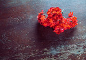 Red flowers geraniums — Stock Photo